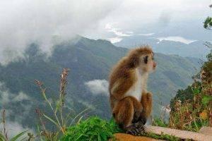 Sri Lanka Junglas, Trekking y Templos