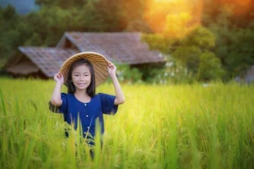 Combinado Vietnam y Camboya - Arrozales