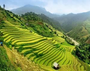 Viaje Vietnam - Halong campos arroz