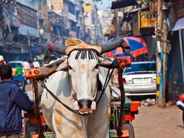 Viajes a la India - Que ver en India - Old Delhi