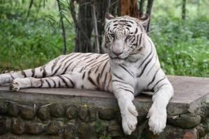 Viajes a la India - Que ver en la India - Ranthambore - Safari Tigres