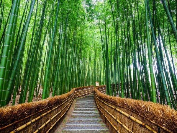 Viajes a Japón - Que ver en Japón - Kioto Bosque bambu