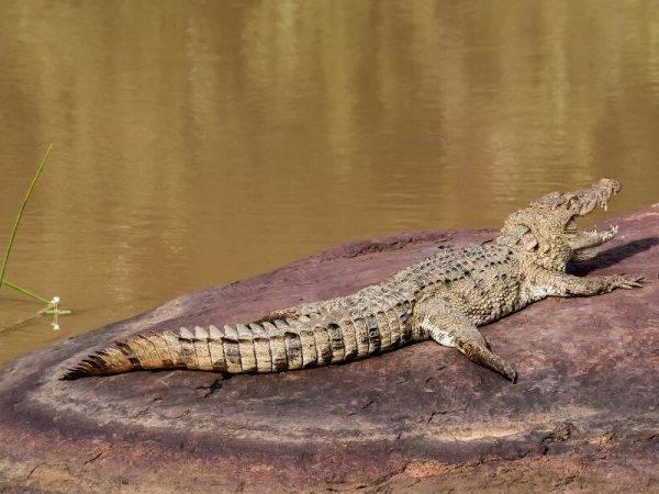 Sri Lanka de Norte a Sur - Parque nacional Yala