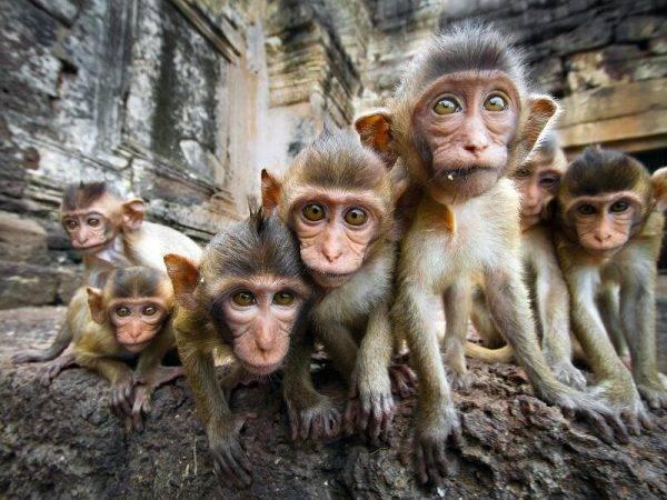 Tailandia de Norte a Sur - Lopburi Templo de los monos