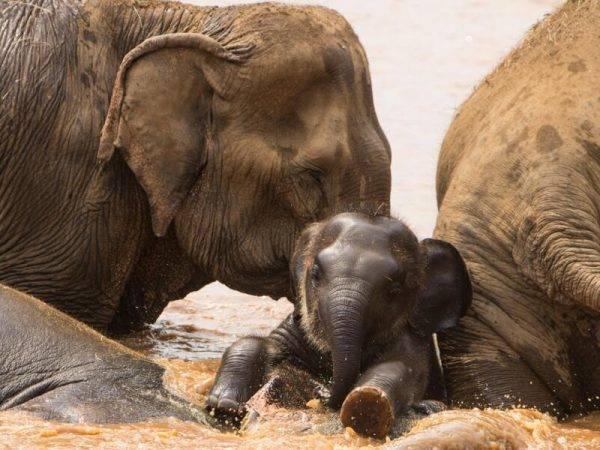 Viajes a Tailandia - Que ver en Tailandia - Chiang Mai - Elefantes