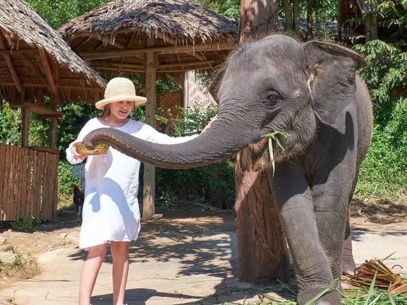 Triangulo de oro y playas de Krabi - Elefantes