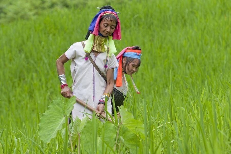 Viajes a Tailandia - Que ver en Tailandia - Chiang Mai - Mujeres Jirafa