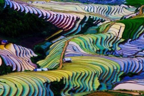 Que ver en Vietnam - Sapa arrozales