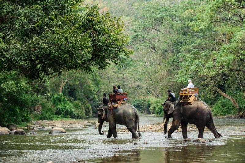 Viajes en familia a Tailandia - Safari en Elefantes