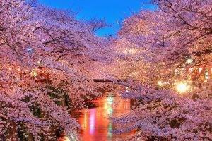 Viajar a Japón para disfrutar del Hanami