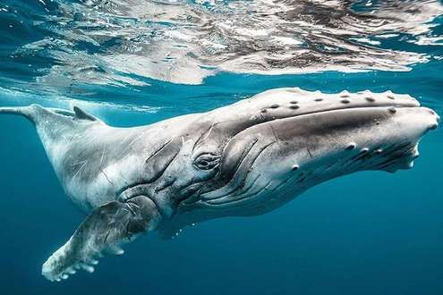 Mirissa ballena azul