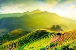 campos arroz halong