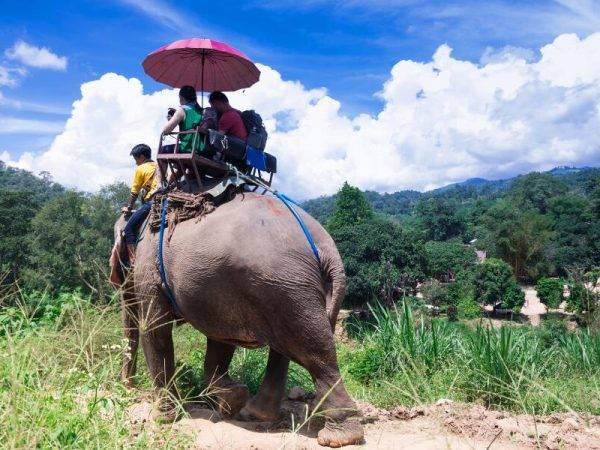 Viajes Tailandia - Safari elefante