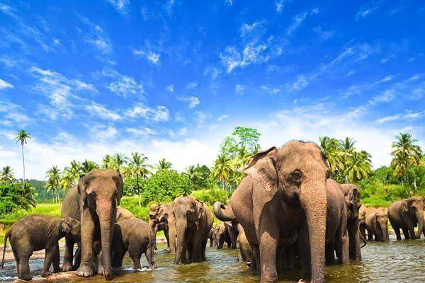 elefantes sri lanka