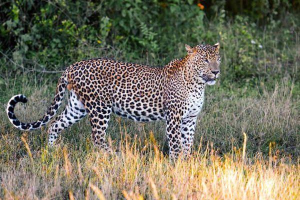 parque nacional yala sri-lanka