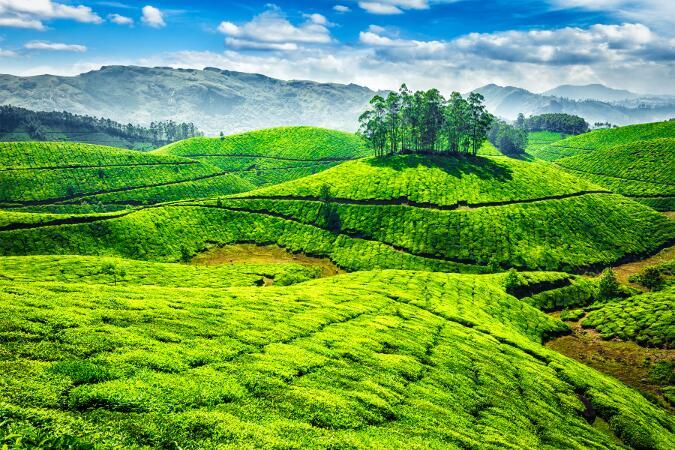 Sur de la India- Periyar