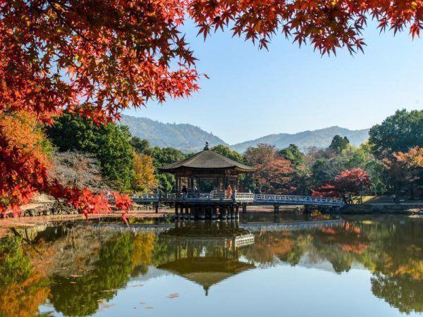 Japon ciudades - Nara Parque de los ciervos