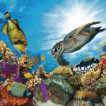 faunia submarinismo maldivas