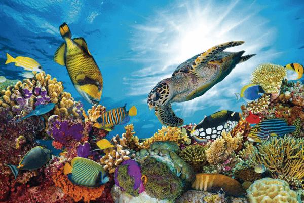 submarinismo maldivas