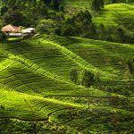 Viajar Sri Lanka