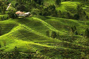5 experiencias inolvidables en tu viaje a Sri Lanka