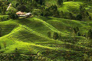 Diez cosas que no te deben faltar en tu maleta si viajas a Sri Lanka