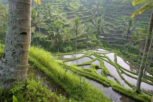 Viaje a Bali: La Isla de los Dioses