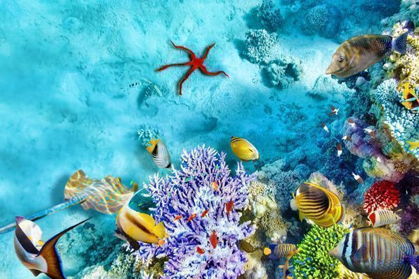 fondo marino Maldivas