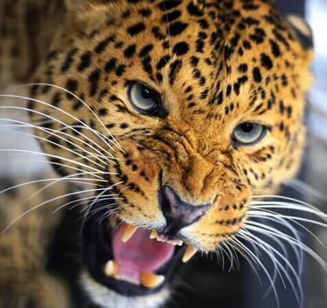 Curiosidades de Sri Lanka - Parque Nacional de Yala