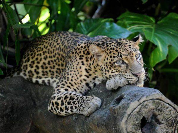 Sri Lanka - Yala - Parque nacional