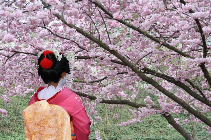 mejor epoca para viajar a japon cerezos