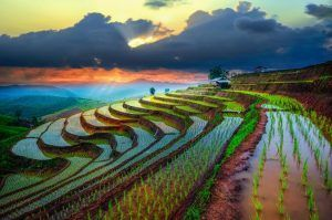 Viaje Tailandia - Chiang Mai - Arrozale