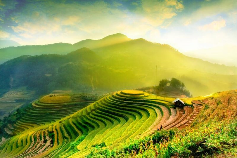 viajes-Vietnam-Halong-campo arroz_800x600
