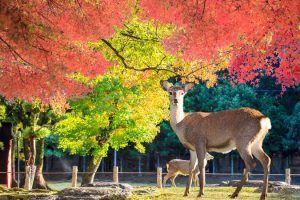 Viaje a Japon Nara Parque Ciervos