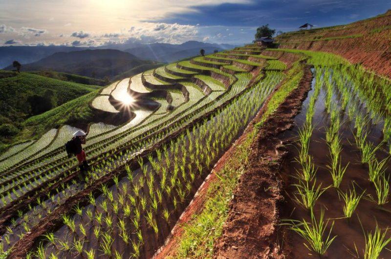 viajes-vietnam-sapa-arrozales_800x600