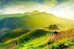 Viajes a Vietnam Halong Arrozales