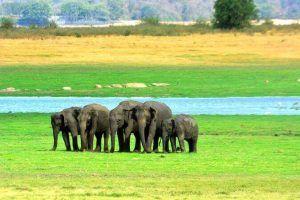 viajes a sri lanka - parque elefantes