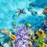 viajes-maldivas_2_800x600