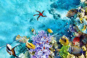 Especies marinas que verás en las Islas Maldivas