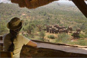 Safari en Kenia Highlights