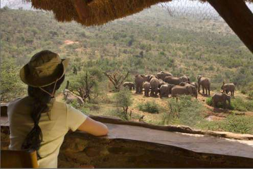 Safari en Kenia Highlights