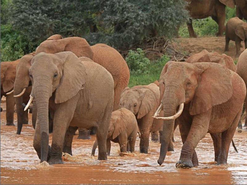 Safari kenia elefantes