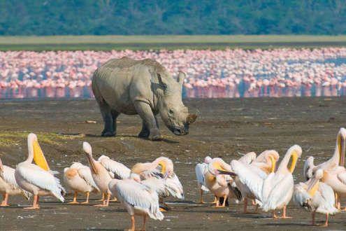 Safari Kenia – Memorias de Africa