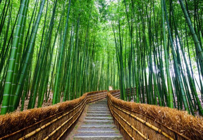 viajes japon - bosque bambu