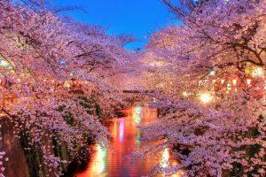 Enamórate del hanami, regalo de la primavera en Japón