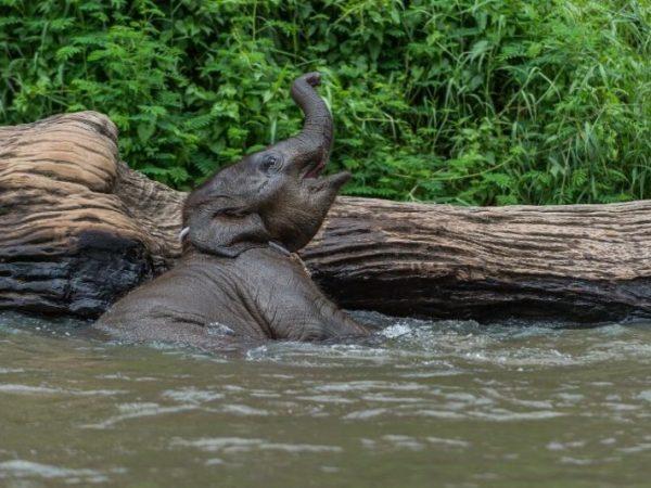 viajes-tailandia-chiang mai-elefantes-2_800X600