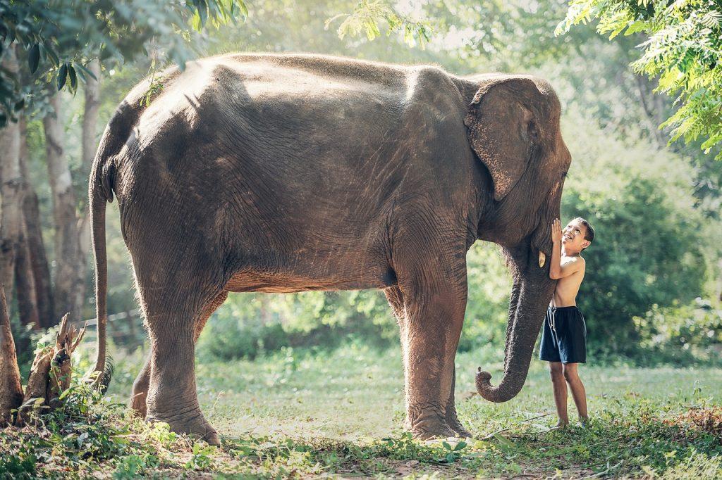 elephant-1822492_1280