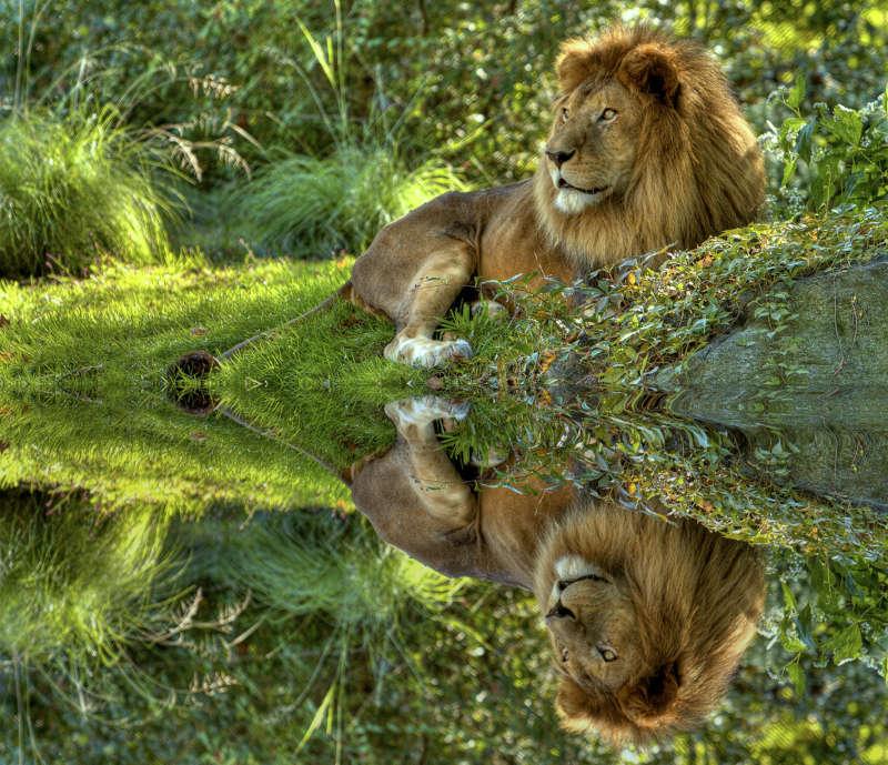 Safari Sudàfrica Parque Kruger