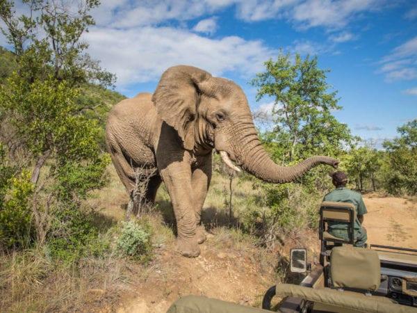 Safari Sudáfrica kruger